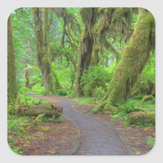 USA, Washington, Olympic National Park, Hoh Rain Square Sticker