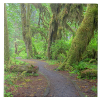 USA, Washington, Olympic National Park, Hoh Rain Tile