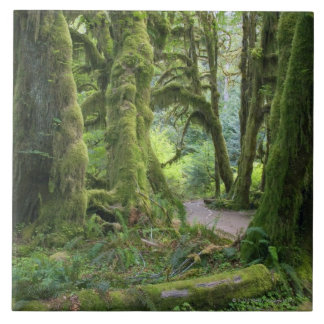 USA, Washington, Olympic National Park, Hoh Rain Tile