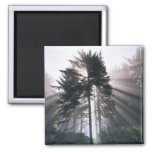 USA, Washington, Olympic National Park, Morning 2 Inch Square Magnet