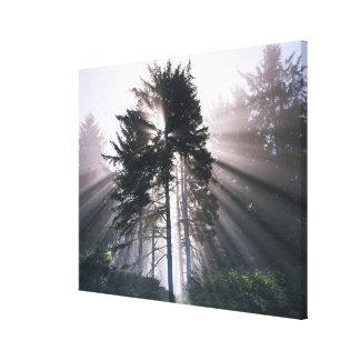 USA, Washington, Olympic National Park, Morning Canvas Print