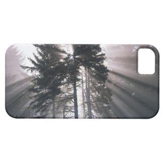 USA, Washington, Olympic National Park, Morning iPhone 5 Cases
