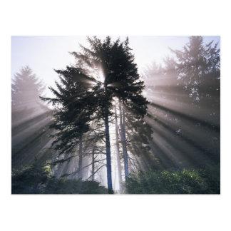 USA, Washington, Olympic National Park, Morning Postcard