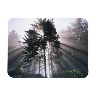 USA, Washington, Olympic National Park, Morning Rectangular Magnets