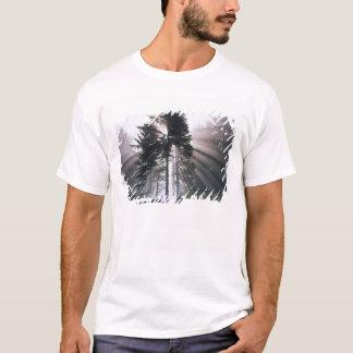 USA, Washington, Olympic National Park, Morning T-Shirt