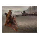 USA, Washington, Olympic National Park, Rialto 2 Postcard