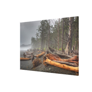 USA, Washington, Olympic National Park, Rialto Canvas Print
