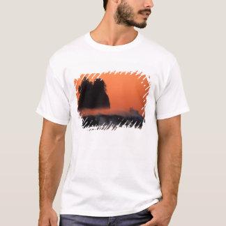 USA, Washington, Olympic National Park, Sea T-Shirt