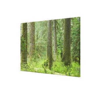 USA, Washington, Olympic National Park, Spring 3 Canvas Print