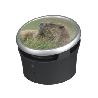 USA, Washington, Olympic NP, Olympic Marmot Bluetooth Speaker