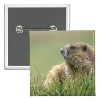 USA, Washington, Olympic NP, Olympic Marmot Pinback Button