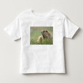 USA, Washington, Olympic NP, Olympic Marmot T-shirt