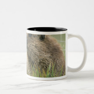 USA, Washington, Olympic NP, Olympic Marmot Two-Tone Coffee Mug