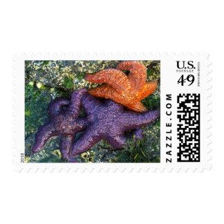 USA, Washington, Orcas Island Postage Stamp