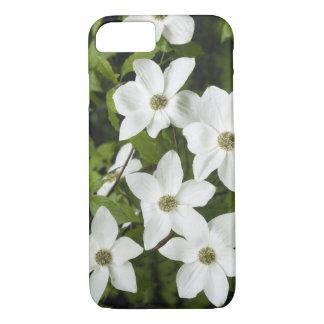 USA, Washington, Pacific Dogwood, Cornus iPhone 8/7 Case