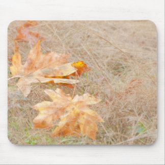 USA, Washington, Quinault. Maple Leaves Mouse Pad