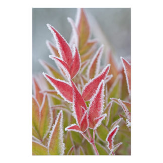 USA, Washington, Seabeck. Close-up of frost on Photo Print