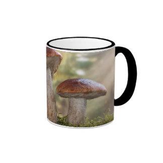 USA, Washington, Seabeck. Leccinum Insigne Coffee Mugs