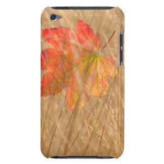 USA, Washington, Seabeck. Vine Maple Leaf Caught Barely There iPod Cases
