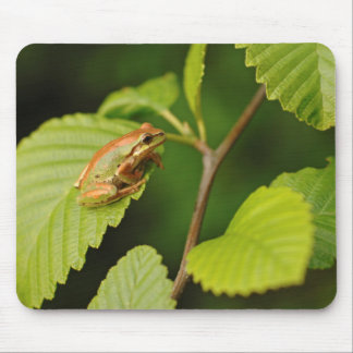 USA, Washington, Seattle, Discovery Park Mouse Pad