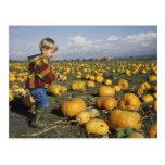 USA, Washington, Snohomish. Small boy Postcard