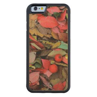 USA, Washington, Spokane Co., Hawthorn Leaves Carved Maple iPhone 6 Bumper Case