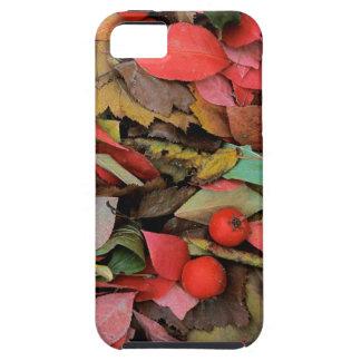 USA, Washington, Spokane Co., Hawthorn Leaves iPhone SE/5/5s Case