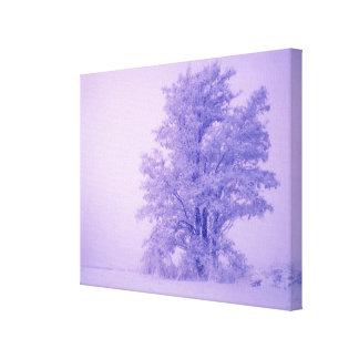 USA, Washington, Spokane County, Frosted Stretched Canvas Print