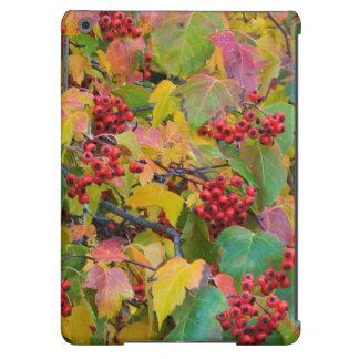 USA, Washington, Spokane County, Hawthorn Leaves 2 iPad Air Cover