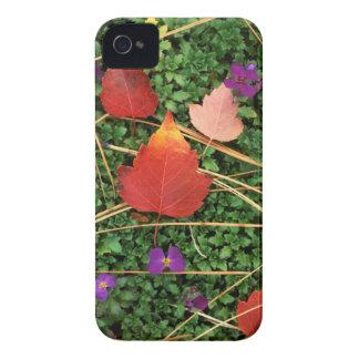 USA, Washington, Spokane County, Hawthorn Leaves 3 Case-Mate iPhone 4 Case