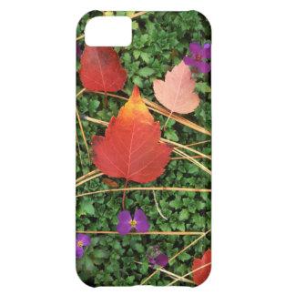 USA, Washington, Spokane County, Hawthorn Leaves 3 Cover For iPhone 5C