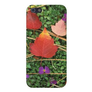 USA, Washington, Spokane County, Hawthorn Leaves 3 Cover For iPhone SE/5/5s