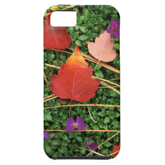 USA, Washington, Spokane County, Hawthorn Leaves 3 iPhone SE/5/5s Case