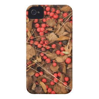 USA, Washington, Spokane County, Hawthorn Leaves iPhone 4 Cover