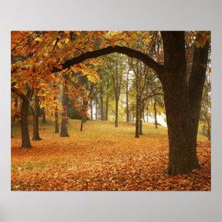 USA, Washington, Spokane, Manito Park, Autumn 2 Poster
