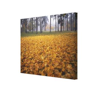 USA, Washington, Spokane, Manito Park, Autumn Canvas Print
