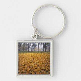 USA, Washington, Spokane, Manito Park, Autumn Keychain