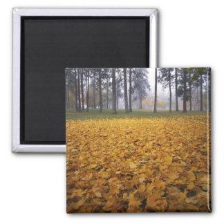 USA, Washington, Spokane, Manito Park, Autumn Magnet