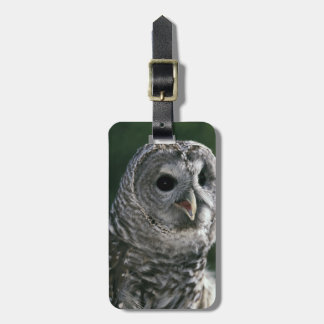 USA, Washington State. Barred Owl (Strix varia) Bag Tag
