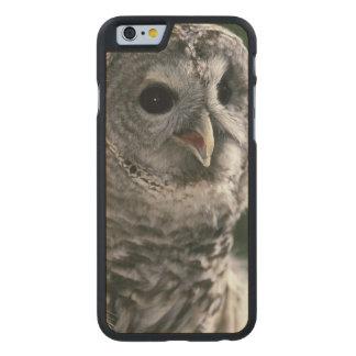 USA, Washington State. Barred Owl (Strix varia) Carved Maple iPhone 6 Slim Case