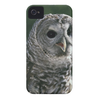 USA, Washington State. Barred Owl (Strix varia) Case-Mate iPhone 4 Case