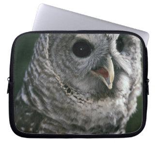 USA, Washington State. Barred Owl (Strix varia) Computer Sleeve