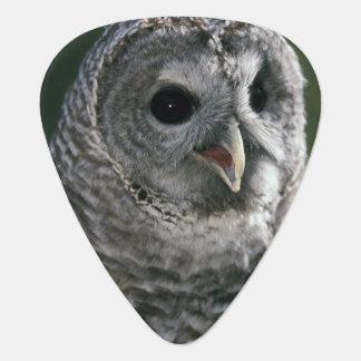 USA, Washington State. Barred Owl (Strix varia) Guitar Pick