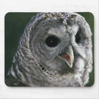 USA, Washington State. Barred Owl (Strix varia) Mouse Pad
