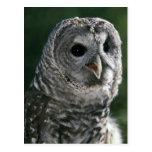 USA, Washington State. Barred Owl (Strix varia) Post Card