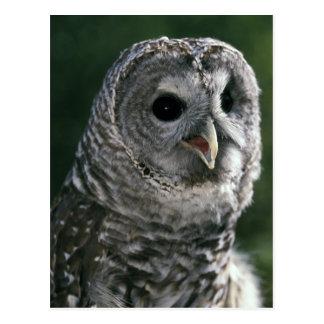 USA, Washington State. Barred Owl (Strix varia) Postcard