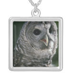 USA, Washington State. Barred Owl (Strix varia) Silver Plated Necklace