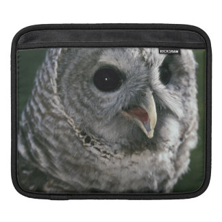 USA, Washington State. Barred Owl (Strix varia) Sleeve For iPads