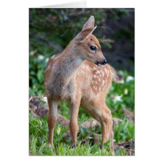 USA, Washington State. Blacktail Deer Fawn Card