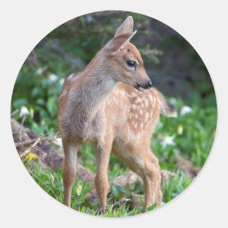 USA, Washington State. Blacktail Deer Fawn Classic Round Sticker